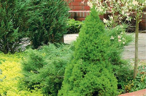 Rośliny o ozdobnych liściach